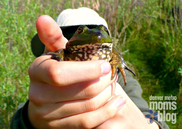 A boy holding up a bullfrog to the camera