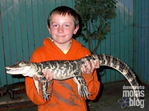 A boy holding up a baby aligator