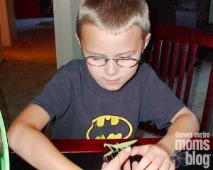 A boy holding a praying mantis