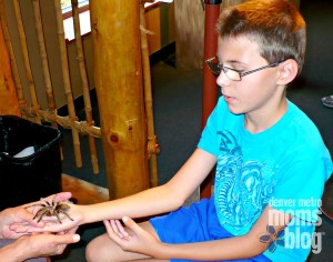 A boy holding a tarantula with help
