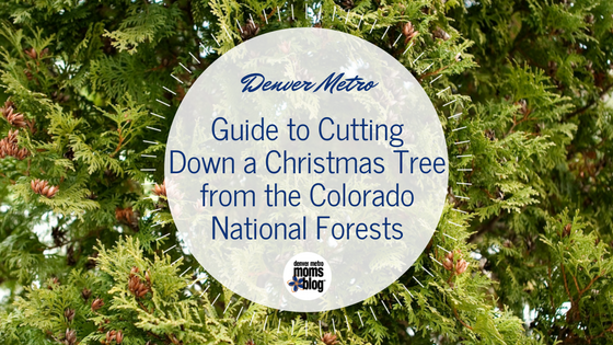 Denver Guide to Cutting Down a Christmas Tree