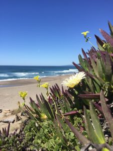 Planning a Mexico Family Vacation | Denver Metro Moms Blog