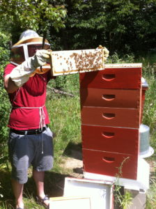 Earth Day:  Be Bee Friendly and Protect Your Kids | Denver Metro Moms Blog