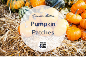 Denver Pumpkin Patches 2017 | DMMB