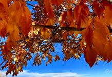 Guide to Colorado's Best Fall Foliage - 2021 - Denver Moms