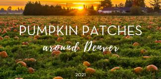 2021 Denver Pumpkin Patches - Denver Mom